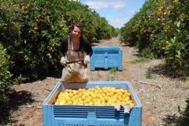 Fruitpicking Australien