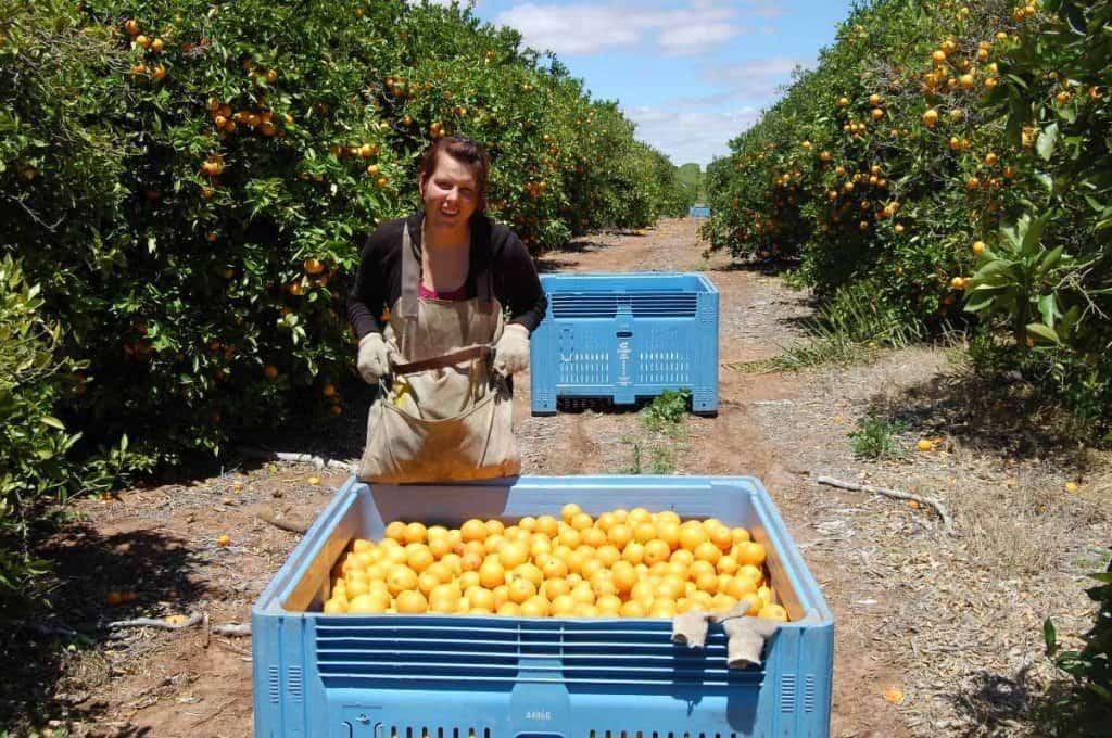 Farmarbeit Australien