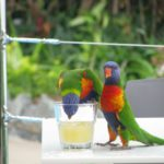 Resorts Australien