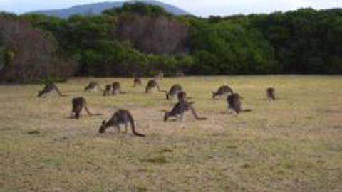 Doch noch Kangaroo Island