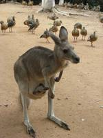 Reisebericht Australien - Queensland