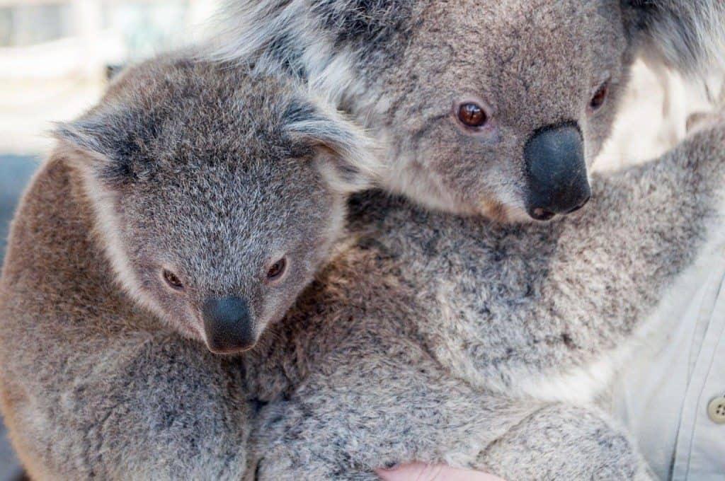 Arbeitserlaubnis für Australien