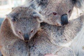 Auslandsjahr Australien