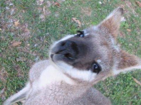 Au Pair in Australien – mit Online Au-pair-Kurs
