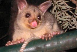 Australien Erfahrungsbericht