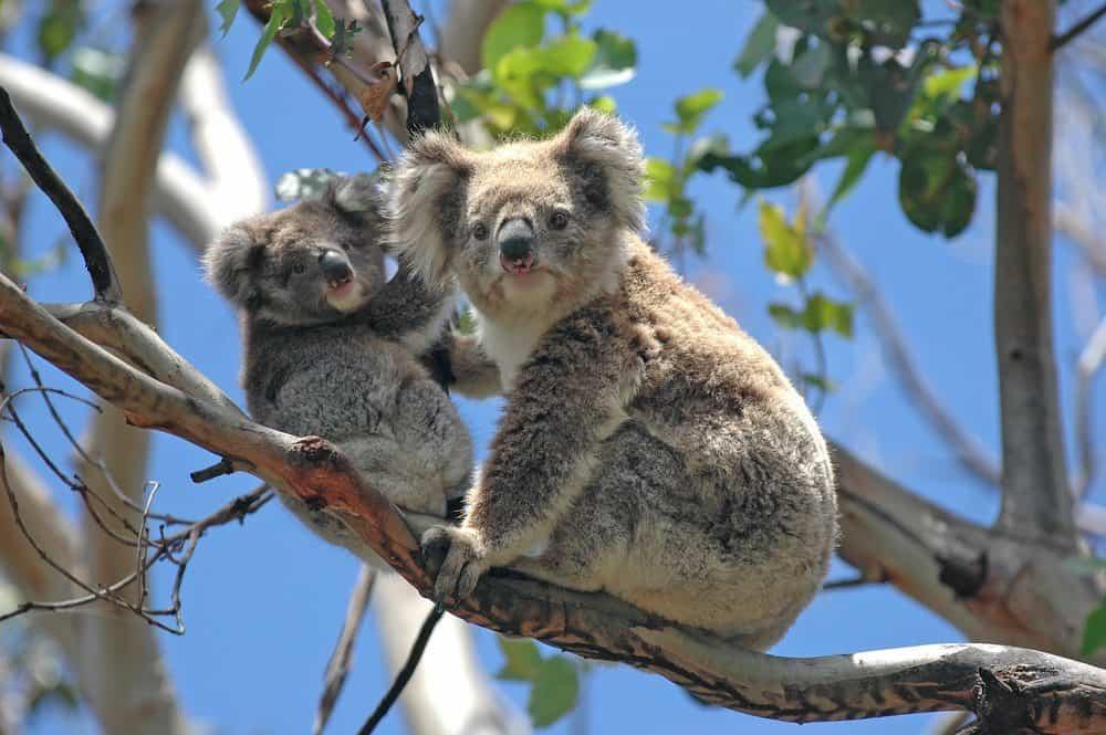 Jobs mit Tieren in Australien