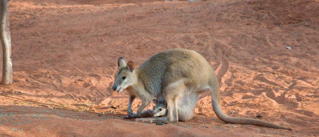 Sprachkurs Australien