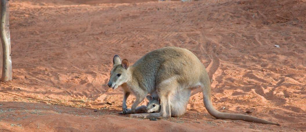 Gastfamilie Australien