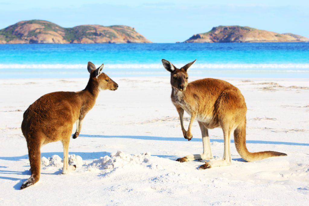 Arbeitsvisum Australien - Arbeitsvisum für Studenten in Australien