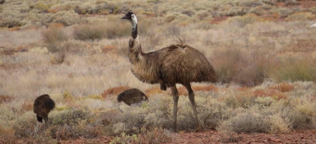 Über Australien