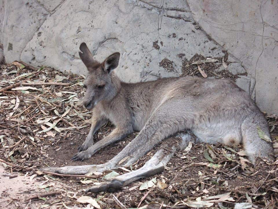 Australien Farmarbeit für Working Holiday Maker! Erntehelfer in Australien gesucht!